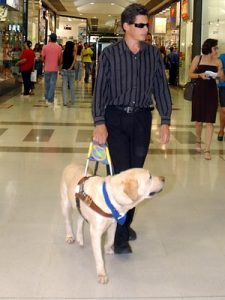 Blind person walking in mall with guide dog